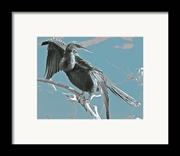 Framed Print featuring the photograph Drying My Wings by Joseph Reilly