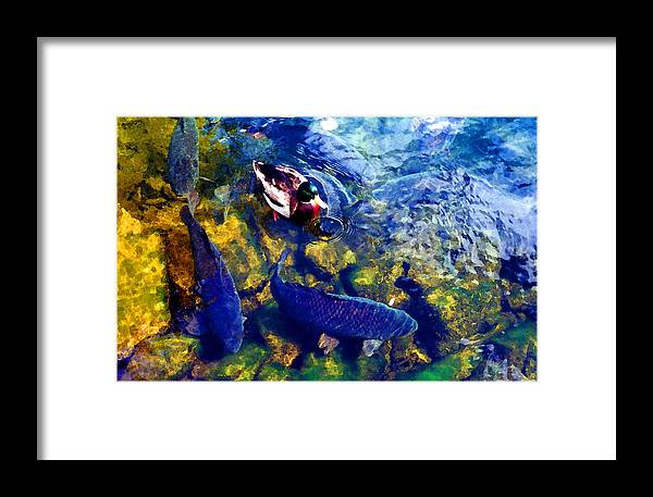 River Framed Print featuring the photograph Duck And Carp Wc 2 by Lyle Crump
