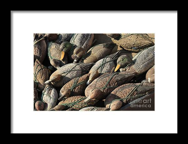 Ducks Framed Print featuring the photograph Duck Decoys On Burano by Michael Henderson