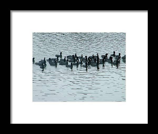 Framed Print featuring the photograph Duck Family by Nereida Slesarchik Cedeno Wilcoxon