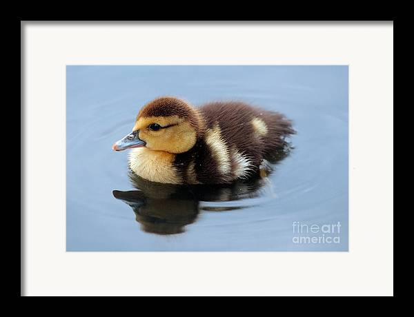Baby Framed Print featuring the photograph Duckling by Jeannie Burleson