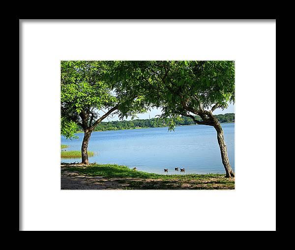 Ducks Framed Print featuring the photograph Ducks On Lake Edge by Francesco Roncone