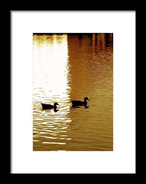 Silhouettes Framed Print featuring the photograph Ducks On Pond 2 by Steve Ohlsen