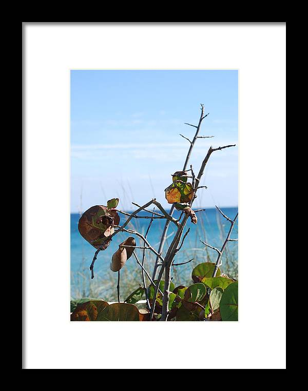 Ocean Framed Print featuring the photograph Dune Plants by Rob Hans