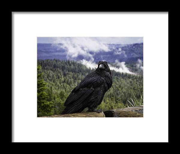 Raven Framed Print featuring the photograph Dunraven Raven by Elizabeth Eldridge