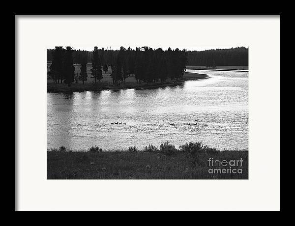 Wildlife Framed Print featuring the photograph Dusk At The Yellowstone River by Susan Chandler