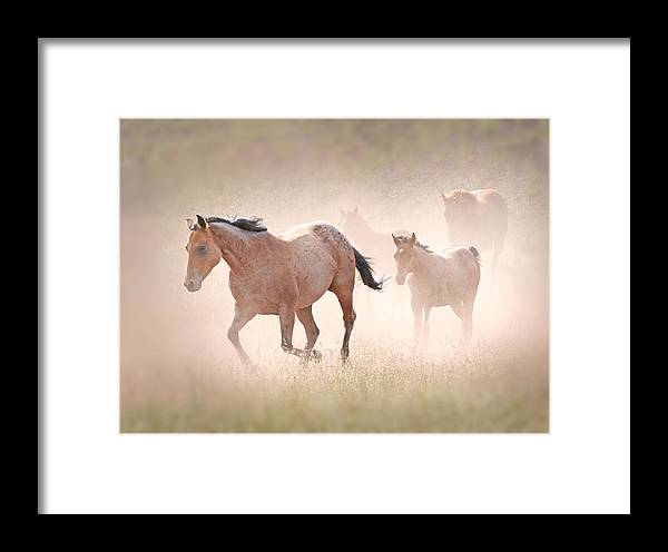 Michael Hamilton Framed Print featuring the photograph Dusty Emergence 002 by Michael Hamilton