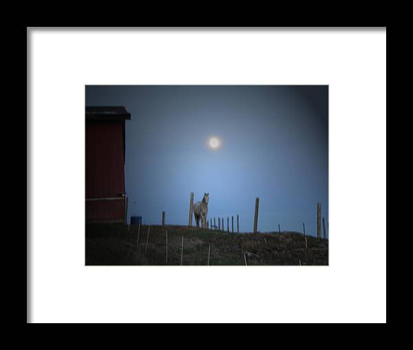 Horse Framed Print featuring the photograph Dusty by Martie DAndrea