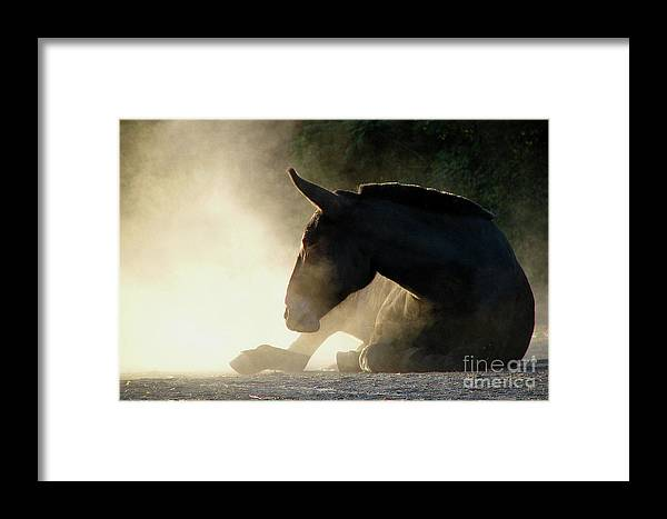 In Focus Framed Print featuring the photograph Dusty Roll by Deborah Johnson