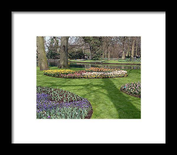Keukenhof Gardens. Lisse Framed Print featuring the photograph Dutch Tulip Gardens by Charles Ridgway