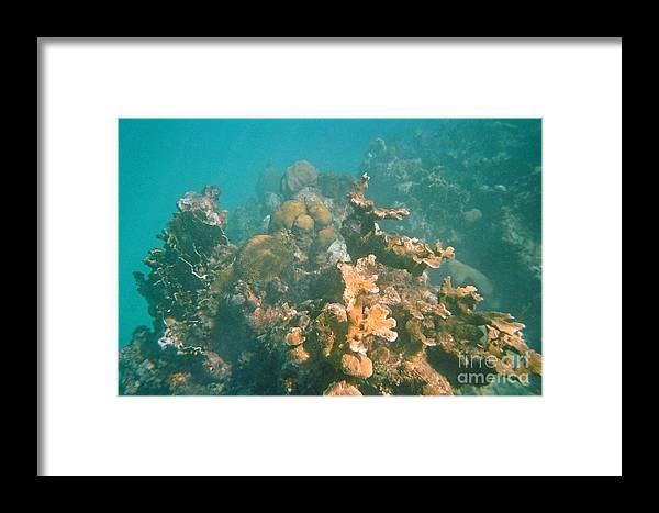 Dying Coral Framed Print featuring the photograph Dying Coral by John Malone