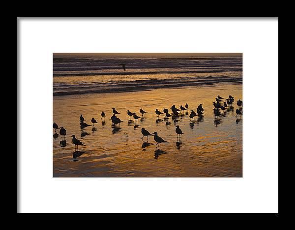 Beach Ocean Seagull Gull Bird Birds Sand Wave Waves Sun Sunrise Reflection Shaddow Sky Cloud Framed Print featuring the photograph Eager Anticipation by Andrei Shliakhau
