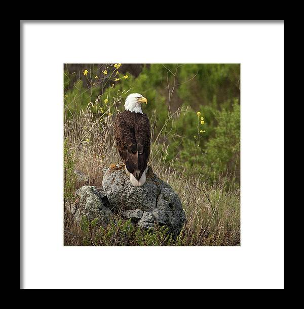 Haliaeetus Leucocephalus Framed Print featuring the photograph Eagle Eye by Don Henderson