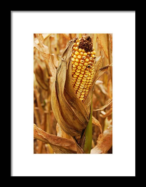 Dry Framed Print featuring the photograph Ear by Jame Hayes