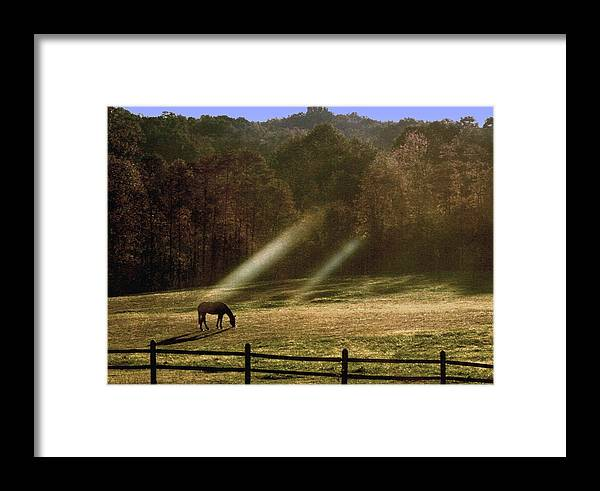 Grazing Horse Framed Print featuring the photograph Early Morning Grazing by Diane Merkle