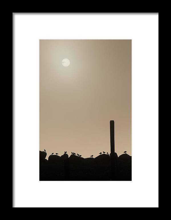 Animals Framed Print featuring the photograph Early Morning Silhouette  by Chad Davis