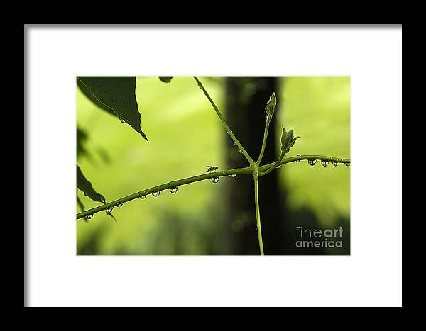 Insects Framed Print featuring the photograph Early Morning Walker by Neil Doren