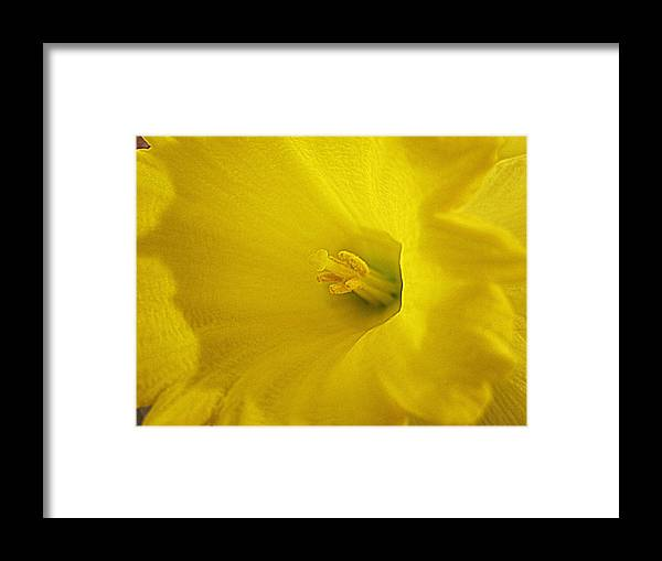 Flowers Framed Print featuring the digital art Early Spring by Bonita Brandt