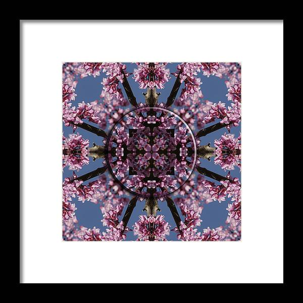 Mandala Framed Print featuring the photograph Eastern Red Bud Mandala by Alan Skonieczny