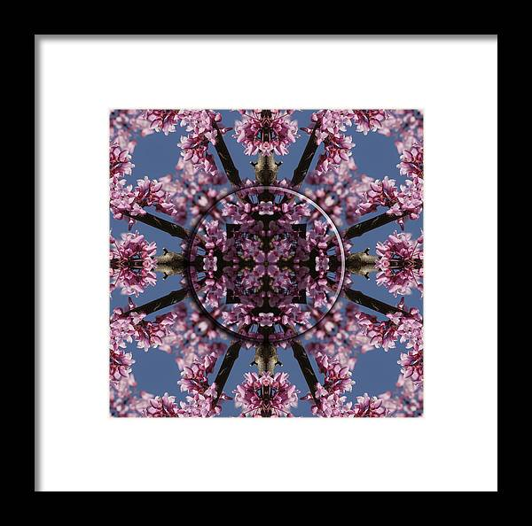 Mandala Framed Print featuring the photograph Eastern Red Bud Mandala by Alan Skonieczny