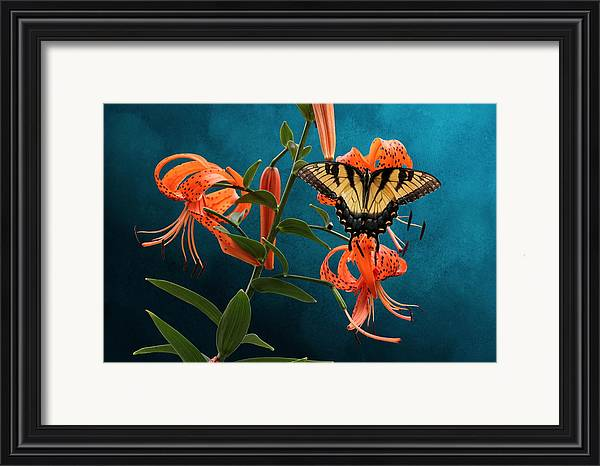 Studio Dalio - Eastern Tiger Swallowtail Butterfly On Orange Tiger Lily Framed Print