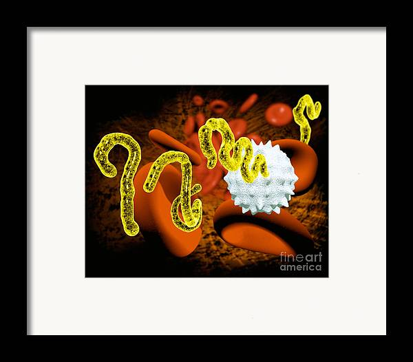 Africa Framed Print featuring the photograph Ebola Virus by Victor Habbick Visions and SPL and Photo Researchers