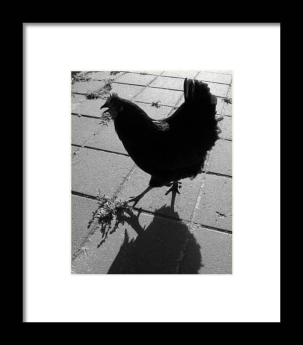 Photograph Framed Print featuring the photograph Echo by Lindsey Orlando