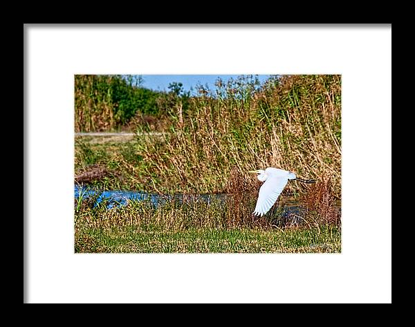 Marsh Framed Print featuring the photograph Egret In The Marsh by Bill Perry