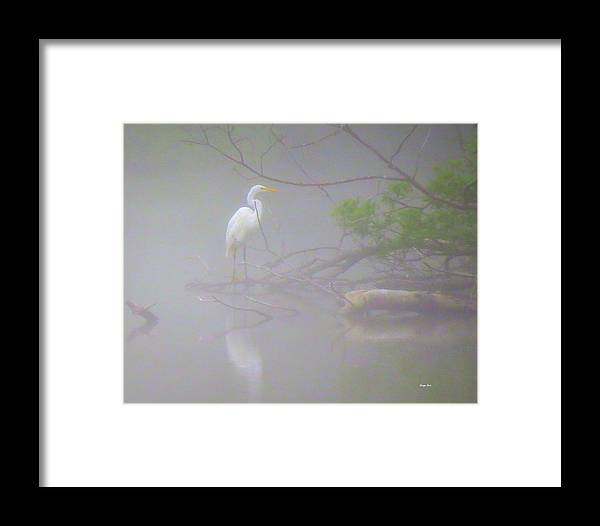 Egret Framed Print featuring the photograph Egret In The Mist by George Savic