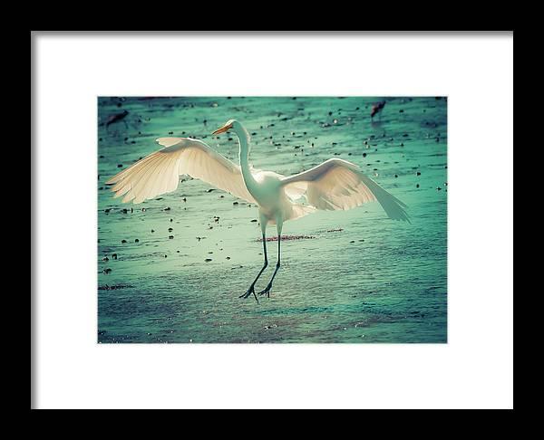 Digital Art Framed Print featuring the digital art Egret Landing by Melinda Dreyer