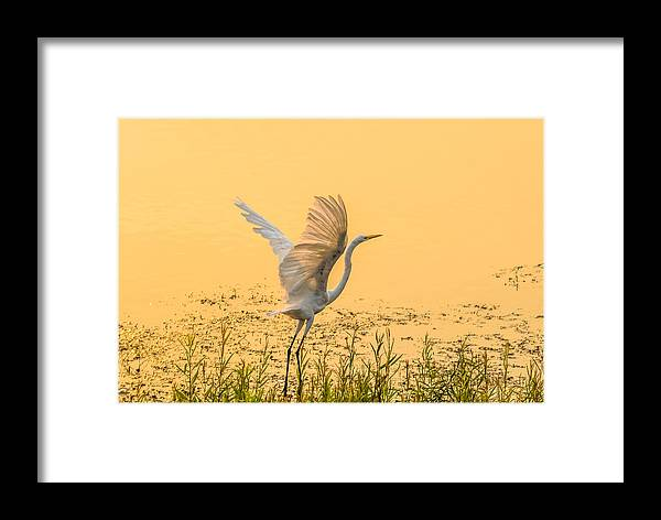 California Framed Print featuring the photograph Egret Take Off 1 by Marc Crumpler