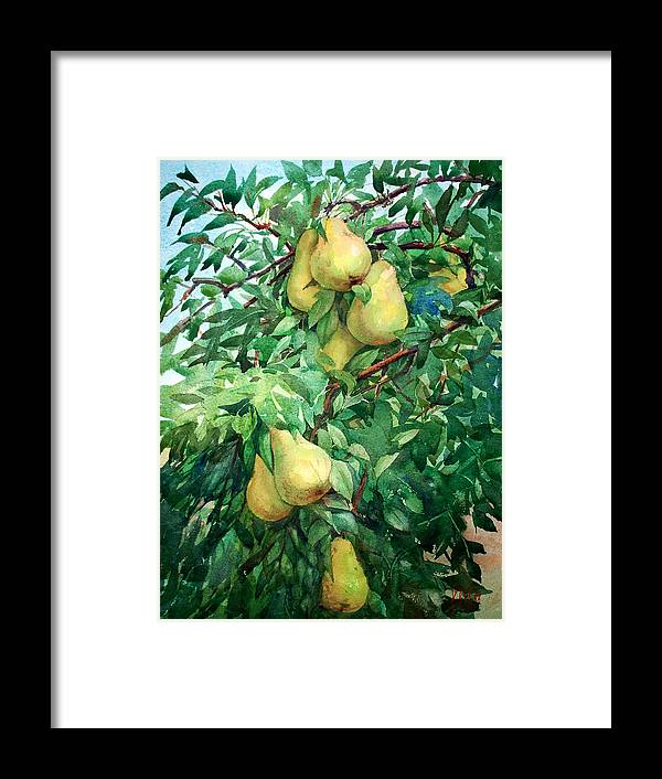 Peter Sit Watercolor Framed Print featuring the painting Eight Pears by Peter Sit