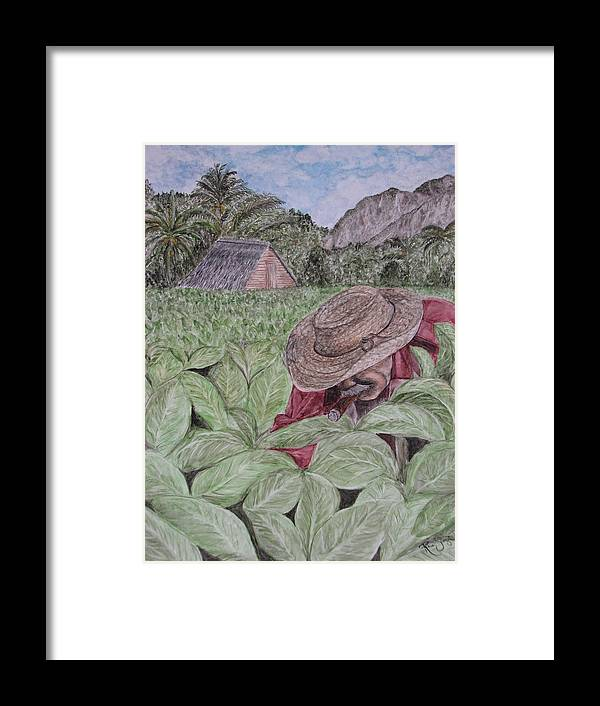 Tobacco Framed Print featuring the painting El Campo De Tabaco by Roberta Shaughnessy