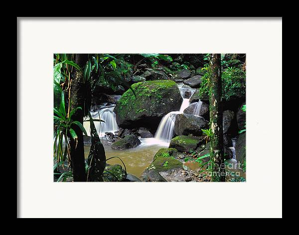 Puerto Rico Framed Print featuring the photograph El Yunque National Forest Waterfall by Thomas R Fletcher