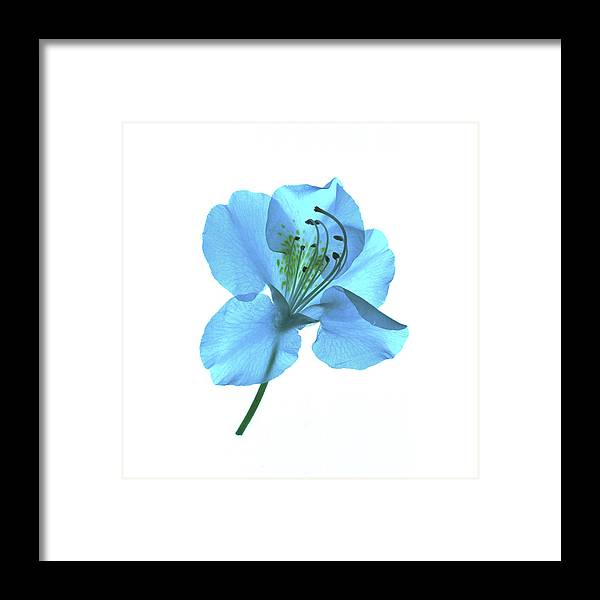 Flower Framed Print featuring the photograph Electric Blue by Vita Mancusi