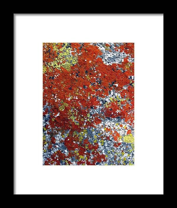 Lichen Framed Print featuring the photograph Elegant Sunburst Lichen by Chris Gudger