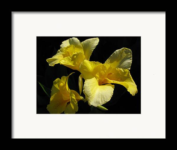 Yellow Flower Framed Print featuring the photograph Elegant Surprise by PJ Cloud