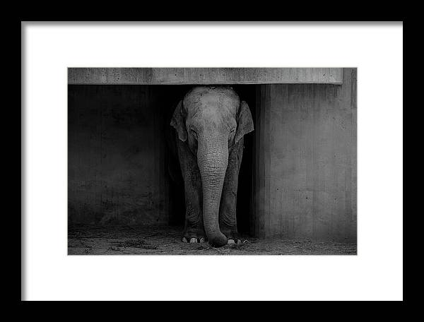 Elephant Framed Print featuring the photograph Elephant #2 by Dani Pozo