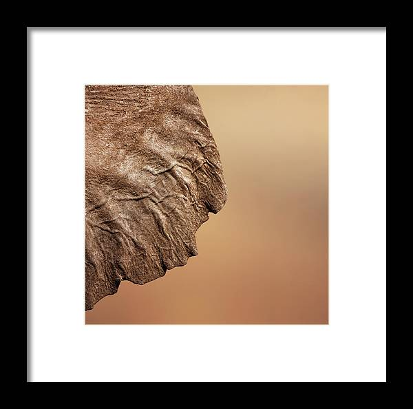 Texture Framed Print featuring the photograph Elephant Ear Close-up by Johan Swanepoel