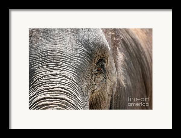 Asian Framed Print featuring the photograph Elephant Eye by Jeannie Burleson