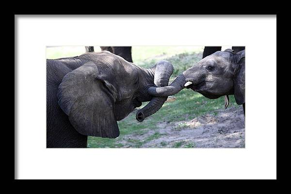 Animals Framed Print featuring the photograph Elephant Greeting IIi by Mary Haber