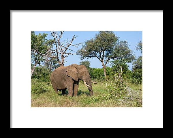 Elephant Framed Print featuring the photograph Elephant Heaven by Andrew Oliver