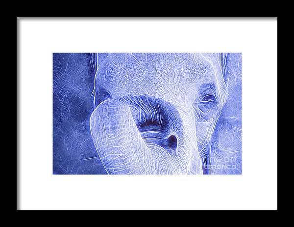 Elephant Framed Print featuring the photograph Elephant Looking Electrified by Randy J Heath