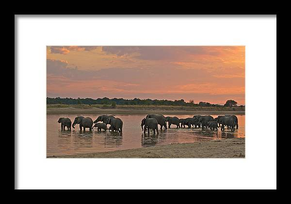 Africa Framed Print featuring the photograph Elephants At Dusk by Johan Elzenga