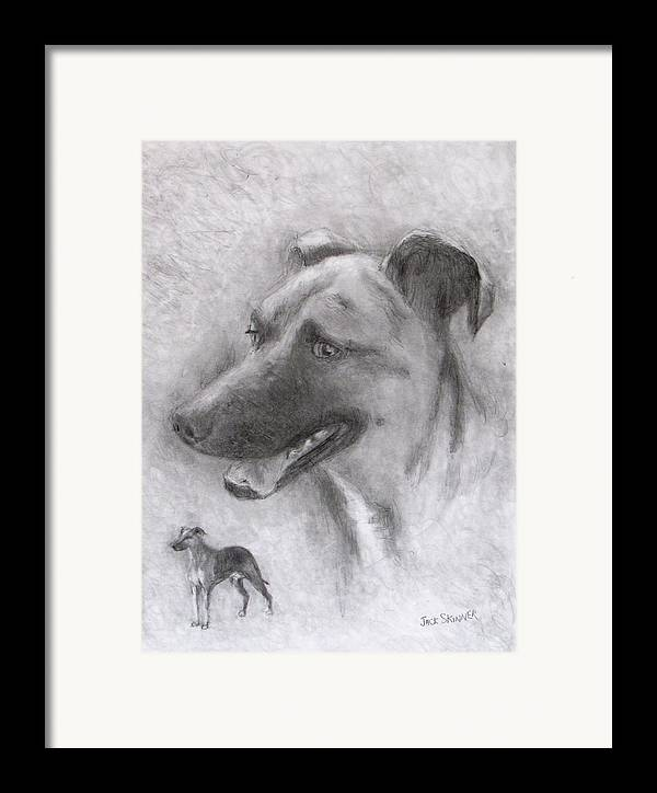 Dog Framed Print featuring the drawing Eliot by Jack Skinner
