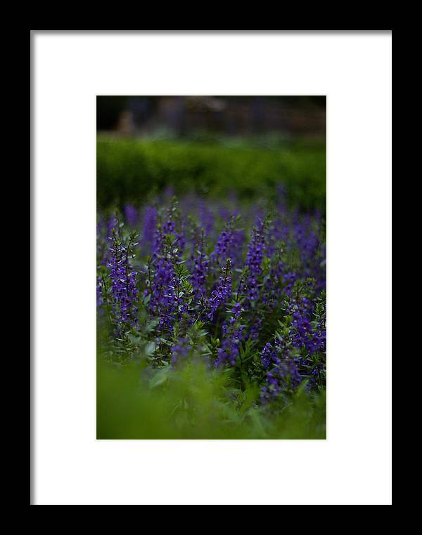 Flower Framed Print featuring the photograph Elizabethan Gardens by Andreas Freund