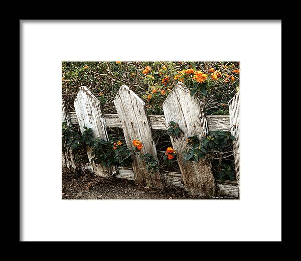 Flowers Framed Print featuring the photograph Elsinore Fence by Lawrence Costales