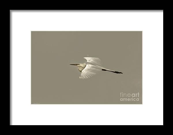 Bird Framed Print featuring the photograph Elusive Giant Egret by Deborah Benoit