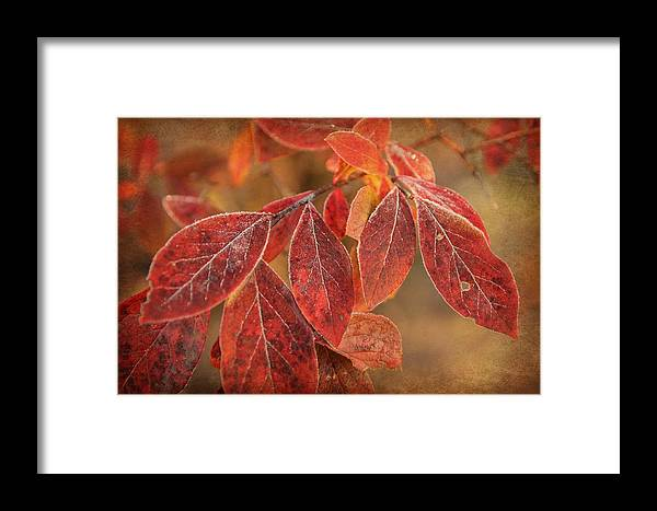 Leaves Framed Print featuring the photograph Embers Of Autumn by Lisa Hurylovich