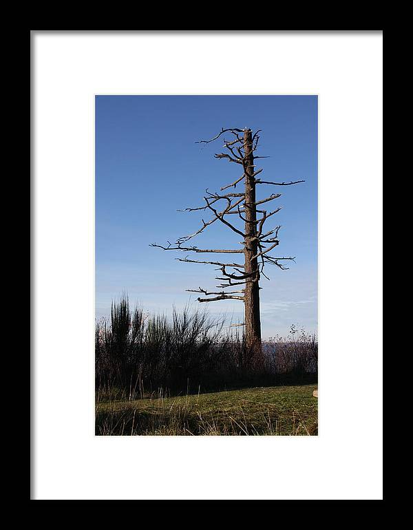 Tree Framed Print featuring the photograph Embracing The Open Sky by Michael Lee